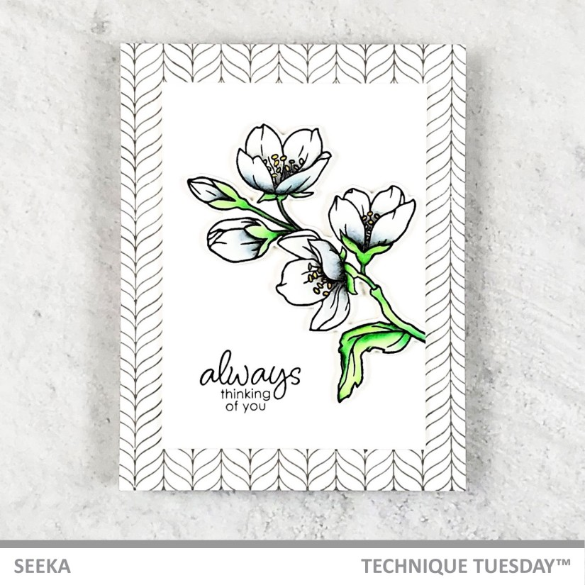 seeka-royal-jasmine-1