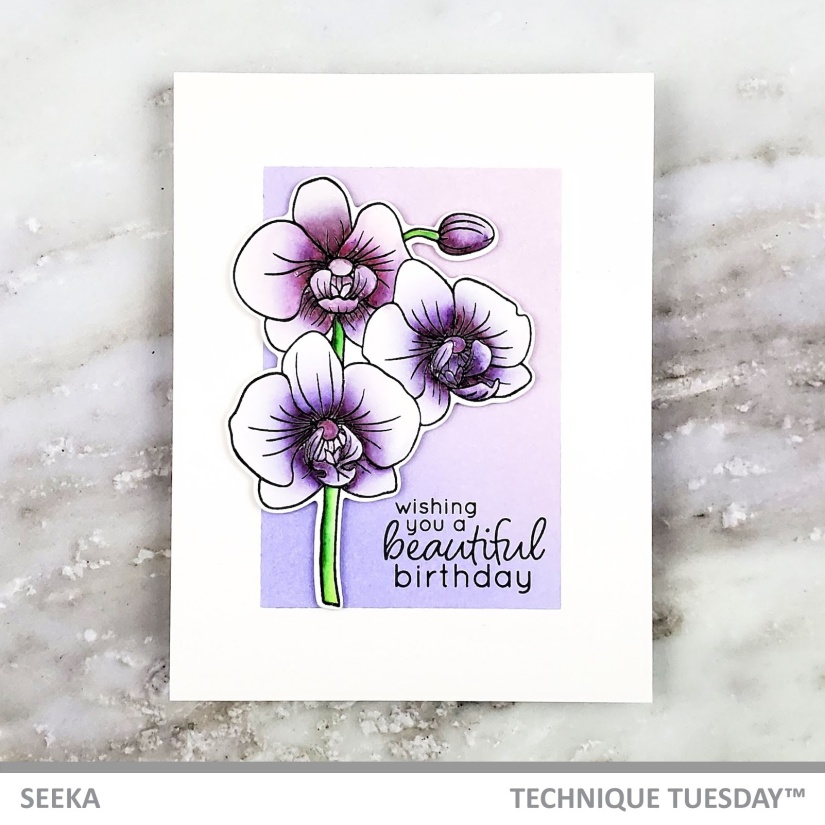 seeka-alluring-orchids-1